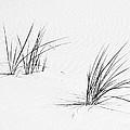 Dune by Ann Horn
