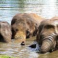 3 Elephants by Hilary Slater