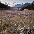 Engadine Meadow by Ginevre Smith