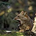 Environmental Woes Of Tierra Del Fuego by Kevin Moloney