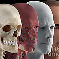 Facial Reconstruction by Science Picture Co