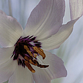 Fawn Lily by Betty Depee