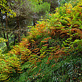 Ferns by Guido Montanes Castillo