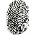 Fingerprint by Photo Researchers Inc