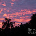 Florida Sunset by Allan  Hughes