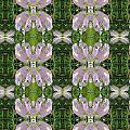 Flowers From Cherryhill Nj America Silken Sparkle Purple Tone Graphically Enhanced Innovative Patter by Navin Joshi