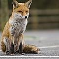 Fox by Jenny Potter