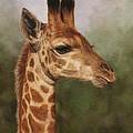 Giraffe by David Stribbling