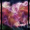 Gladiola Nebula Triptych by Peter Piatt
