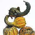 Gourds And Pumpkins by Bernard Jaubert