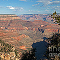 Grandview Point Grand Canyon National Park by Fred Stearns