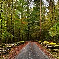 Great Smoky Mountains by Janice Spivey