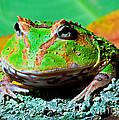 Green Fantasy Frogpacman Frog by Millard H. Sharp