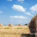 Haystacks In The Field by Michal Bednarek