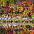 Highway Through Fall Forest by Elena Elisseeva