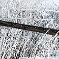 Hoar Frost On The Fence by J McCombie
