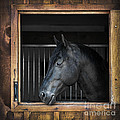 Horse In Stable by Elena Elisseeva
