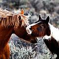 Horse Play by Steve McKinzie