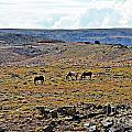 3 Horses At 4 Corners by Randy J Heath