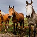 3 Horses by Jean Noren