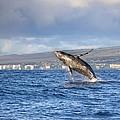 Humpback Whale by M Swiet Productions