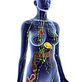 Immune System, Artwork by Alfred Pasieka