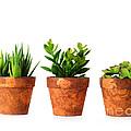 3 Indoor Plants by Boon Mee