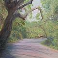 Kingsley Plantation Road by Patty Weeks