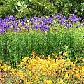 3-layered Garden by Sherrie Triest