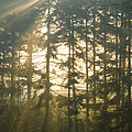 Light In The Forest by Daniel Csoka