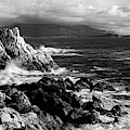 Lone Cypress On The Coast, Pebble by Panoramic Images