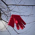 Lost Glove by Maria Heyens