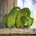 3 Love Birds -206 by Andria Patino