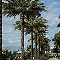 Miami Beach by Carol Ailles