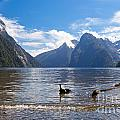 Milford Sound And Mitre Peak In Fjordland Np Nz by Stephan Pietzko