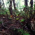 Misty Rainforest El Yunque by Thomas R Fletcher