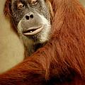 Monkey by Heike Hultsch