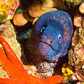 Moray Eel With Starfish by Roy Pedersen