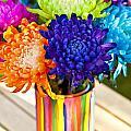 Multicolored Chrysanthemums  by Jim Corwin
