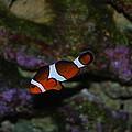 Nemo by Robert Floyd