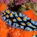 Nudibranch by Ethan Daniels