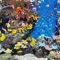 Ocean Aquarium In Shanghai by George Atsametakis