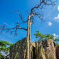 Old And Ancient Dry Tree On Top Of Mountain by Alex Grichenko