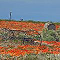 Old Farm Equipment by Howard Stapleton