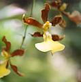 Orchids Dance by Irina Davis