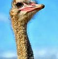 Ostrich by George Atsametakis