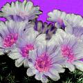 Painterly Cactus Flowers by Bruce Nutting