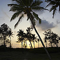 Palm Trees And Sunset by Premierlight Images