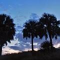 3 Palms 9/19 by Mark Lemmon