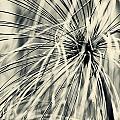 Papyrus by U Schade